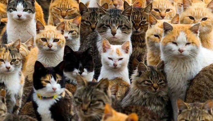 a qué grupo pertenecen los gatos
