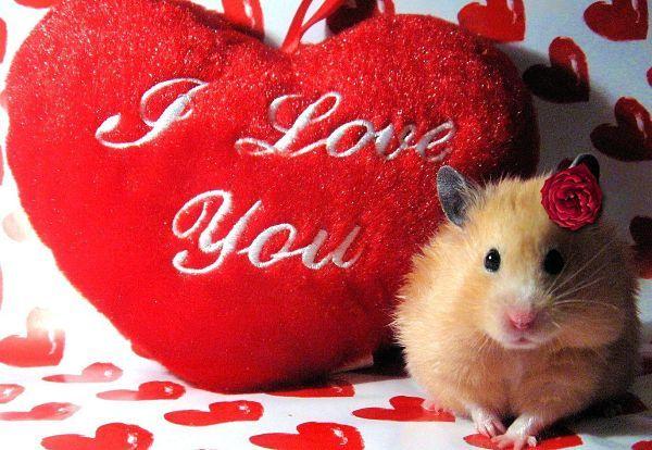 beneficios-de-tener-un-hamster-2