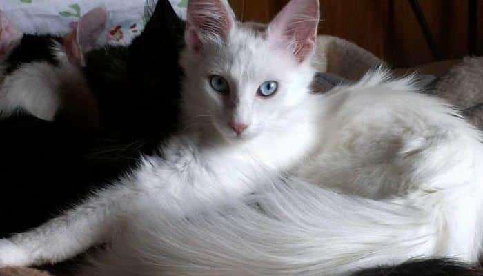 cuidados necesarios para los gatos