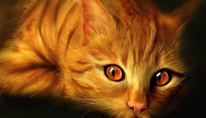 gatos naranjas razas
