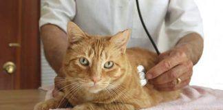 que cuidados necesitan los gatos