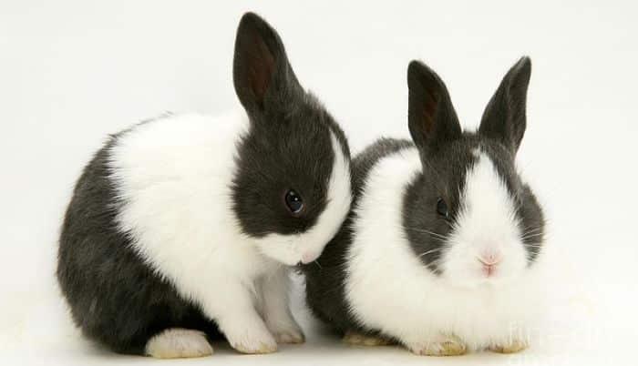 Fotos e imgenes de animales muy gordos - EnelBlogcom