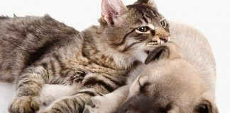 cómo hacer que perros y gatos se lleven bien