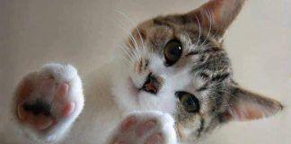 aceite de oliva en gatos