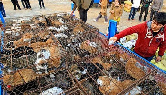 comercio ilegal de gatos en China