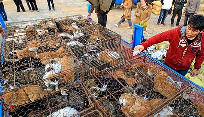 comercio ilegal de gatos en China