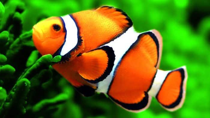 C mo cuidar a un pez alimentaci n h bitat tipos y mucho for Cuidado de peces