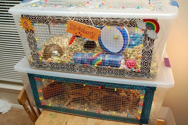 Cómo hacer una jaula para cobayas en casa
