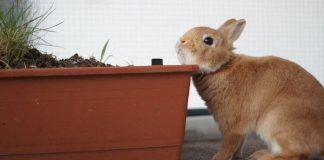 Comportamiento de los Conejos