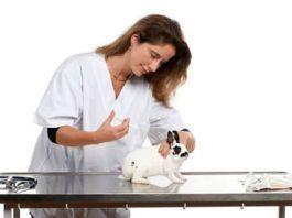 vacunas de los conejos