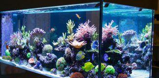 cómo instalar un acuario