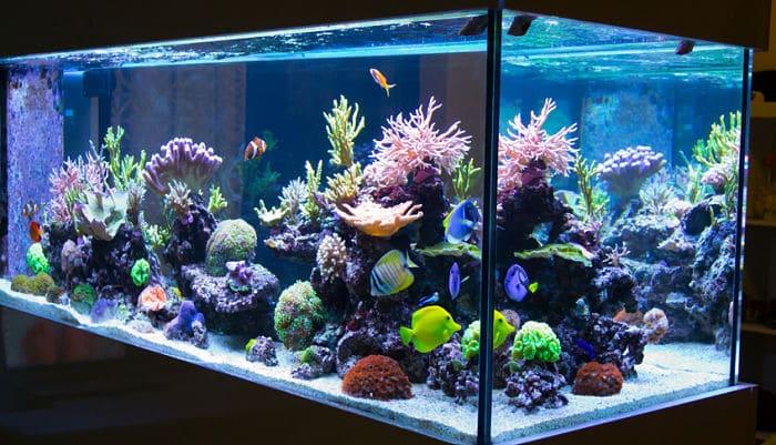 C mo instalar un acuario en casa en 10 sencillos pasos for Acuarios a medida