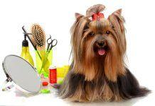 hacer peluquería canina en casa