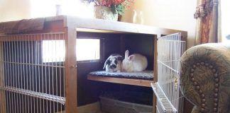jaula para conejos