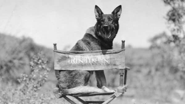 Perros más Famosos de la Historia