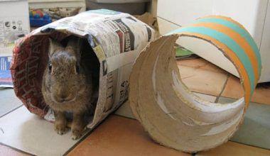 cómo hacer juguetes para conejos