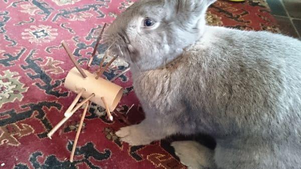 C mo hacer juguetes para conejos en casa - Casas para conejos enanos ...