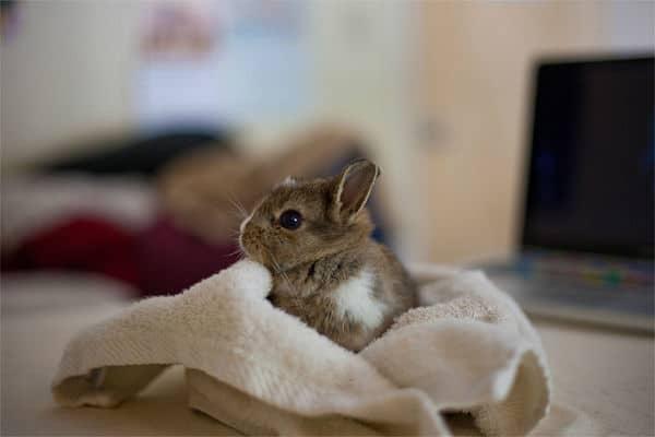 Cómo Hacer Juguetes Para Conejos En Casa - Mascotafiel.com