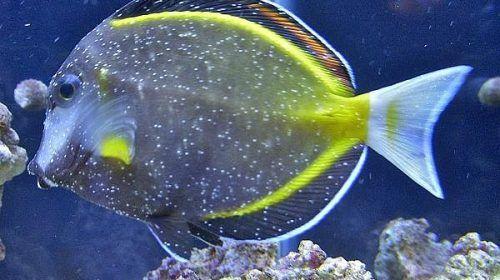 enfermedades comunes de los peces