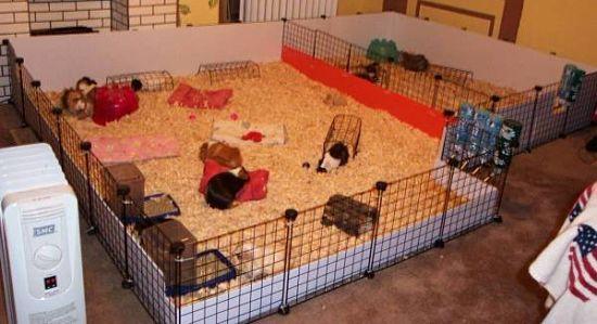 Parque para cobayas 6 ideas para que construyas el m s adecuado - Juguetes caseros para conejos ...