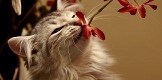 olores que gustan a los gatos