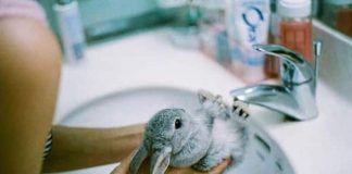 aseo de los conejos
