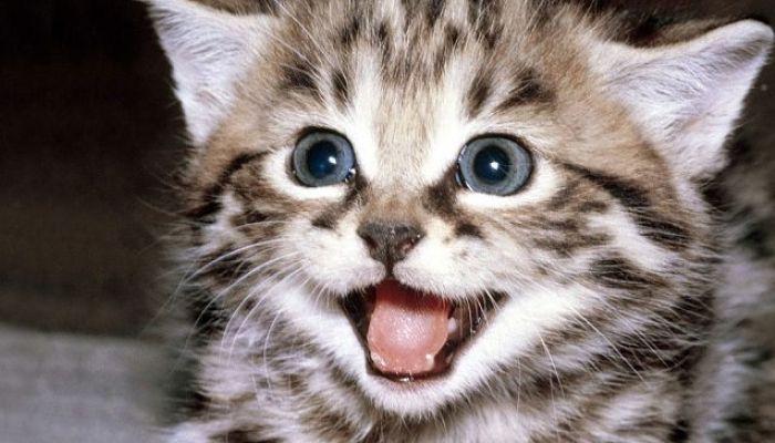 las consecuencias del edema pulmonar en gatos