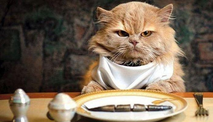 hígado graso en gatos
