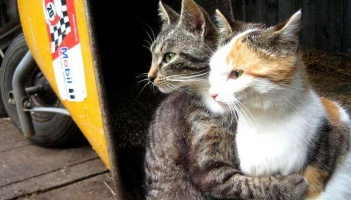 hipotermia en gatos