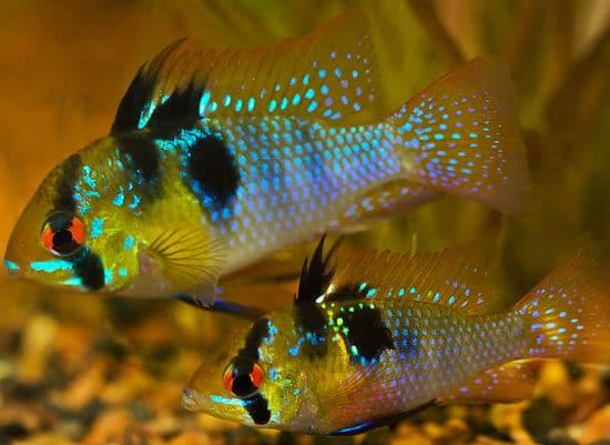 Los 10 peces m s bonitos del mundo para tener en tu acuario - Los peces mas bonitos del mundo ...