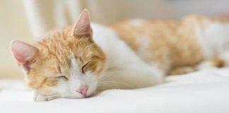 epilepsia en gatos