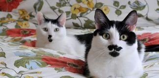 tipos de parásitos en gatos