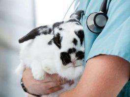 Parásitos en Conejos