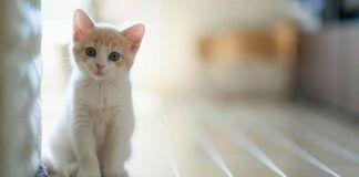 remedios caseros para la tiña en gatos