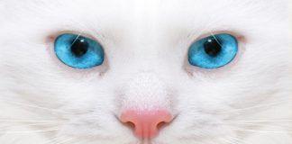 cáncer de nariz en gatos