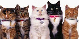 vómito y diarrea en gatos