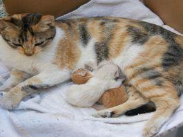 cómo ayudar en un parto de gatas