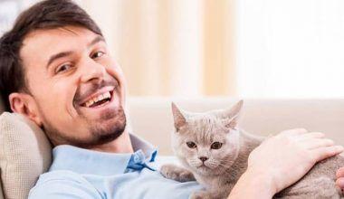 en qué ayudan los gatos a las personas