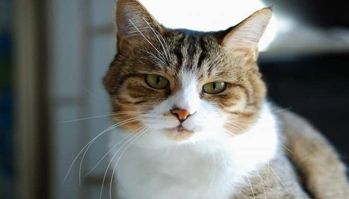 salivación excesiva en gatos