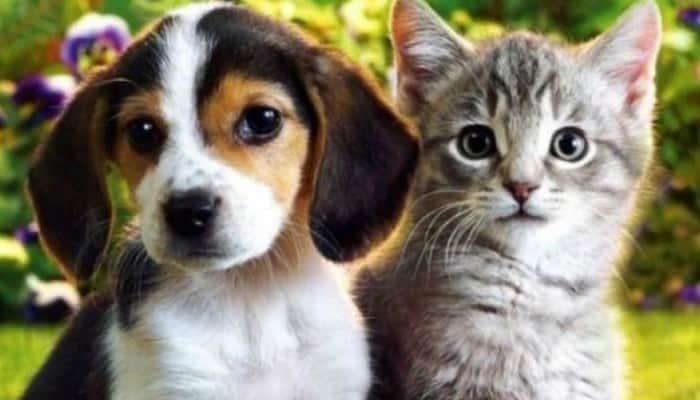 Los Perros Beagle y los gatos