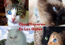 Ojos De Gatos