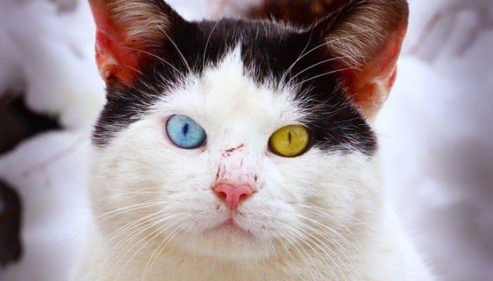 Cambio en los ojos de los gatos